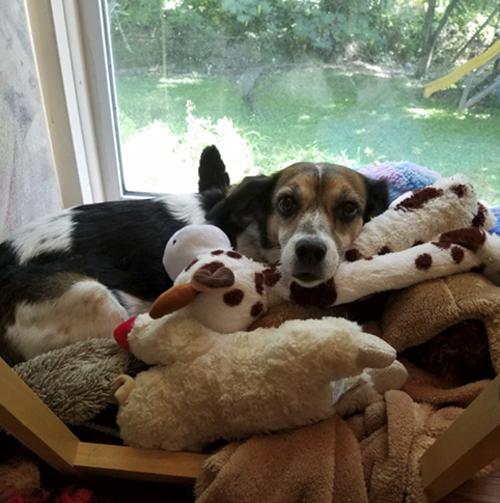 ежедневные фотографии любимого пса