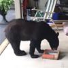 сладкий сюрприз для медведя