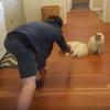кот обожает скользить по полу