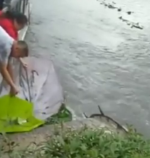 ловля рыбы с помощью зонтиков