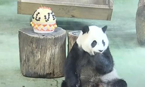 праздничное угощение для панды