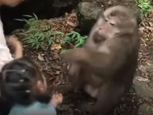 обезьяна ударила девочку по лицу