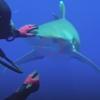 крючок у акулы в пасти