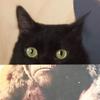 уморительные снимки с кошками