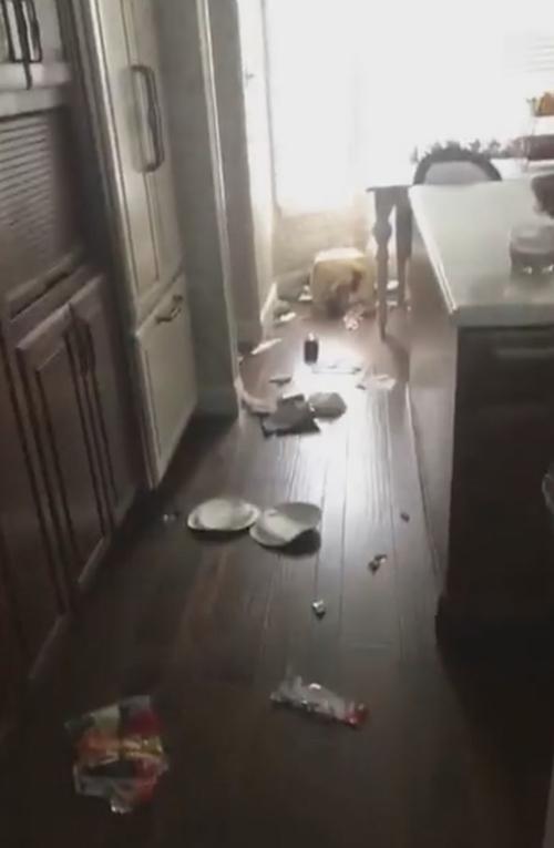 пёс разбросал по кухне мусор