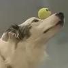 невероятные трюки с мячиком