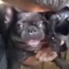 искусственное дыхание для щенков