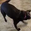 собака любит замороженные вафли