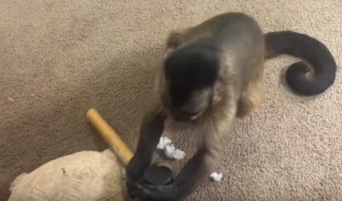 обезьяна возненавидела статуэтку
