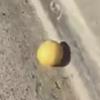 лимон катился вниз с холма