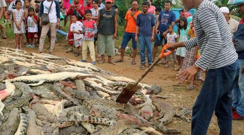 селяне отомстили крокодилам