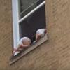 маленькие дети в окне