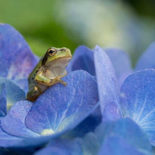 фотограф снимает древесных лягушек