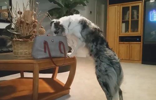 пёс украл из сумки деньги