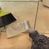 попугай решил помочь с уборкой