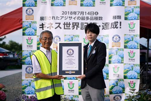 рекордный парк с гортензиями
