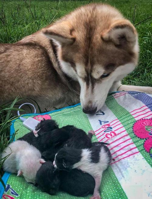 собака спасла умирающих котят