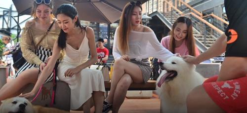 кофейня для людей с собаками