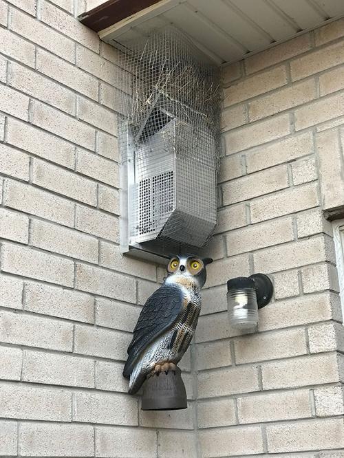 многолетняя война с птицами
