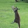 кенгуру расстроился из-за качелей