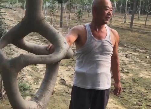 произведения искусства из деревьев