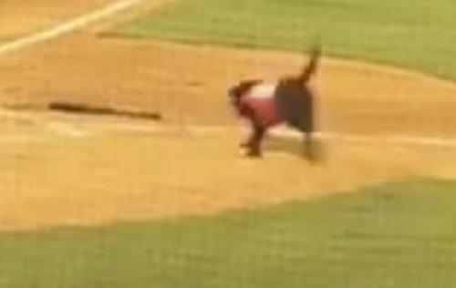 пёс подаёт бейсбольные биты