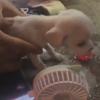 женщина вернула к жизни щенка
