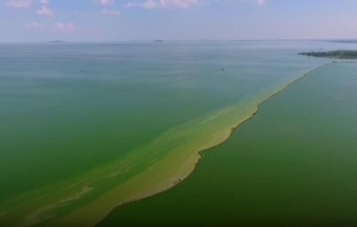 озеро стало зелёным