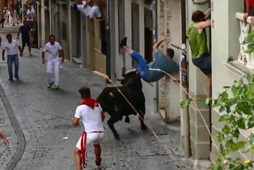 бык напал на мужчину