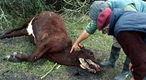 инопланетяне убивают коров