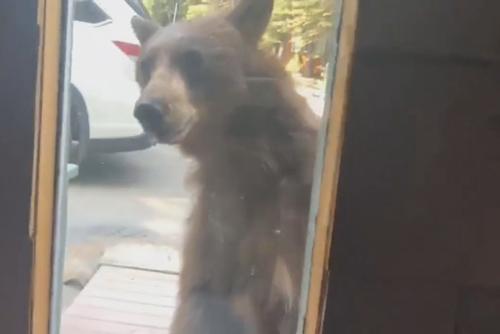 медведица с медвежатами возле дома