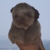 щенок в первый раз плавает в лодке