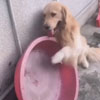 пёс самостоятельно принимает ванну