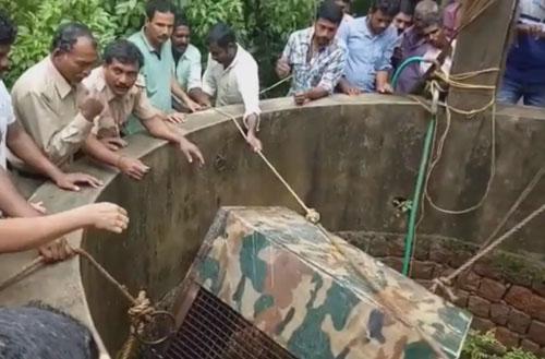 леопард упал в колодец