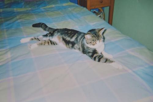кошка пропала на 13 лет