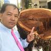 правосудие для срубленного дерева
