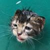 любопытный котёнок в ловушке