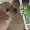 первая встреча с попугаем
