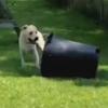 помощь в уборке мусора