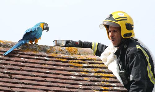 попугай обругал пожарных