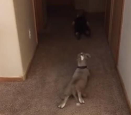 щенок ползает за малышом