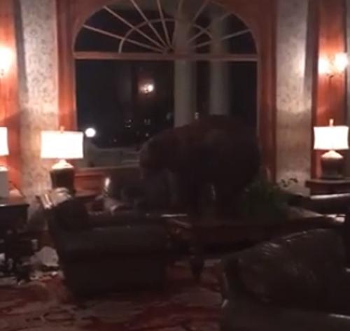 медведь пришёл в отель