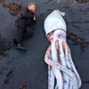 дайверы и гигантский кальмар