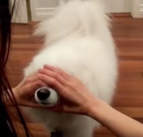 новая мода с носами животных