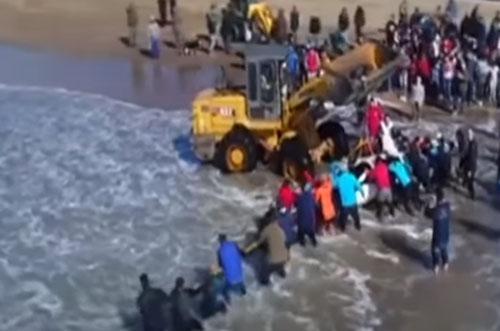 спасатели помогли косаткам