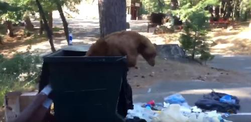 мусорный бак стал ловушкой