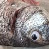 рыбу в магазине освежили