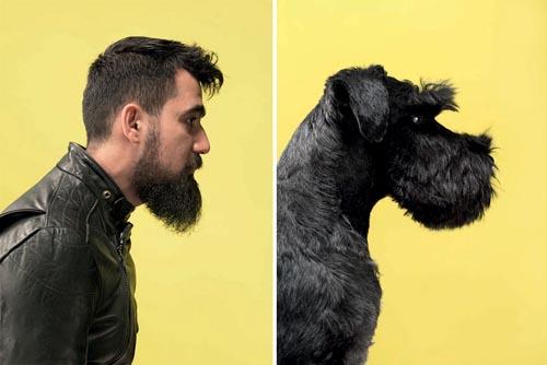 собаки очень похожи на владельцев