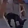 собака украла кошелёк