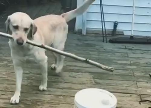 пёс выучил важный урок